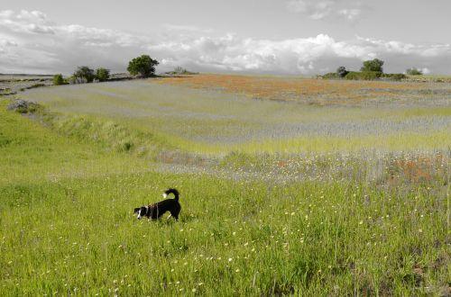 dog landscape pet