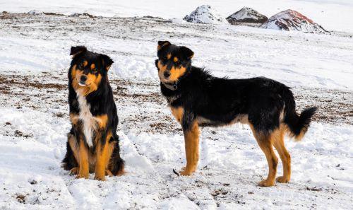 dog winter pet
