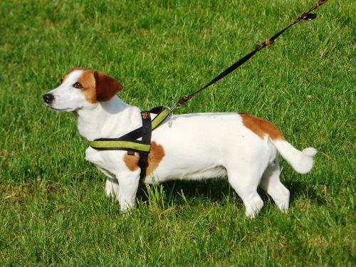 dog doggy animal