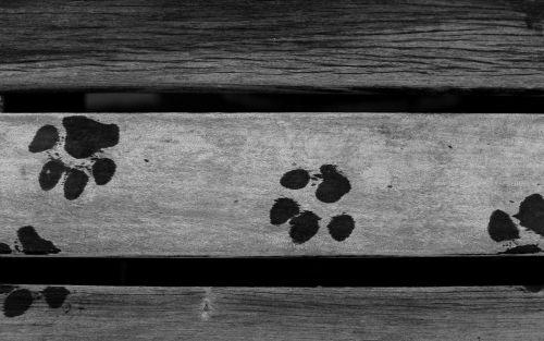 dog animals traces
