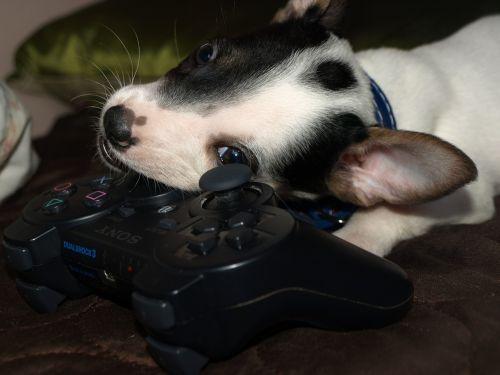 dog puppy cute