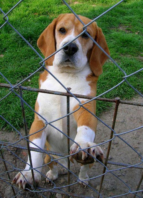 dog hounds animal
