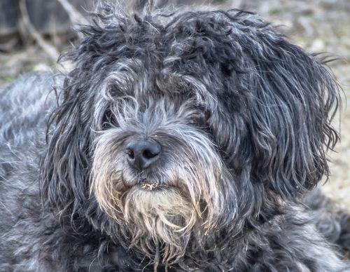 dog abandoned stray dog
