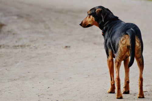dog sad wait