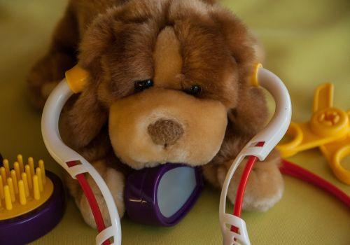 dog veterinarian stethoscope