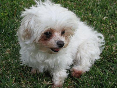 dog domestic pet