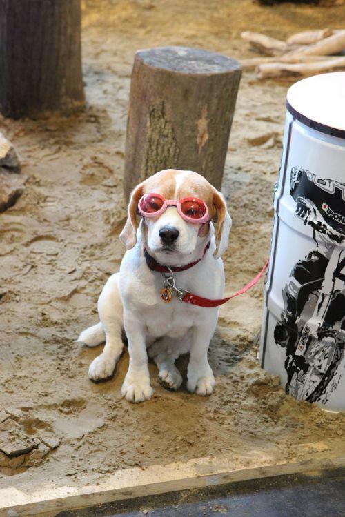 dog animal specs