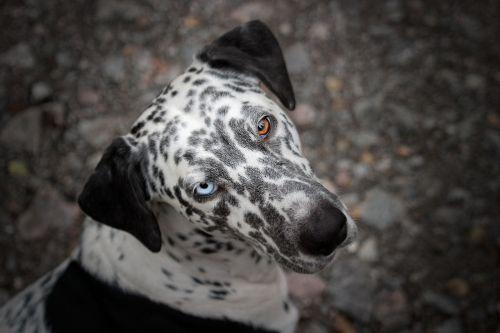 dog animal eyes