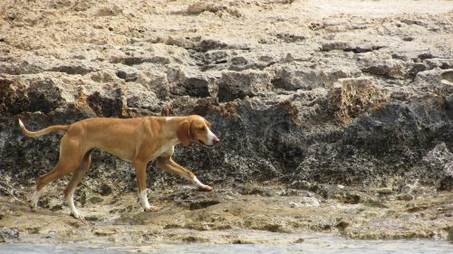 dog stray wandering
