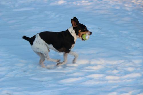dog dog park snow