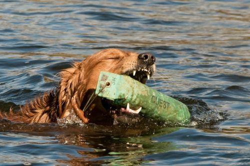 dog water training