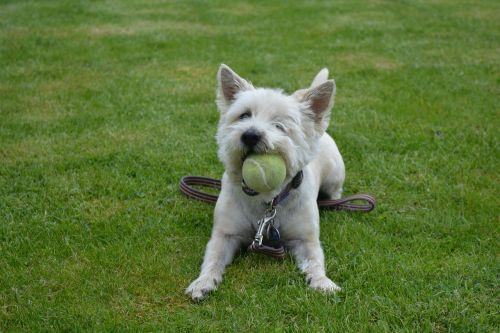 dog dog playing canine