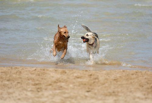 dog puppy pet