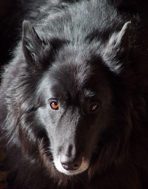 dog reflection old