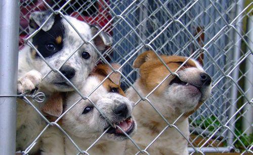 dog puppy shelter