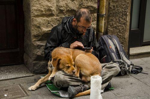 dog homeless puppy