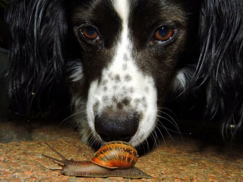 dog snail to watch