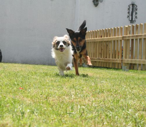 dog male play