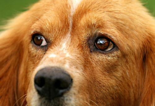 dog eyes view
