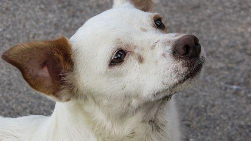 šuo,mielas,žvilgsnis,trokšta,šuniukas,gyvūnas,mielas šuo,žavinga,portretas,mielas šuniukas,išraiška