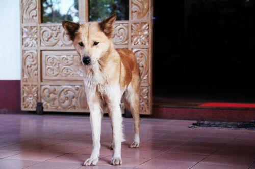 dog thin curiosity