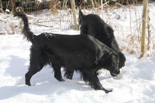 dogs pet winter