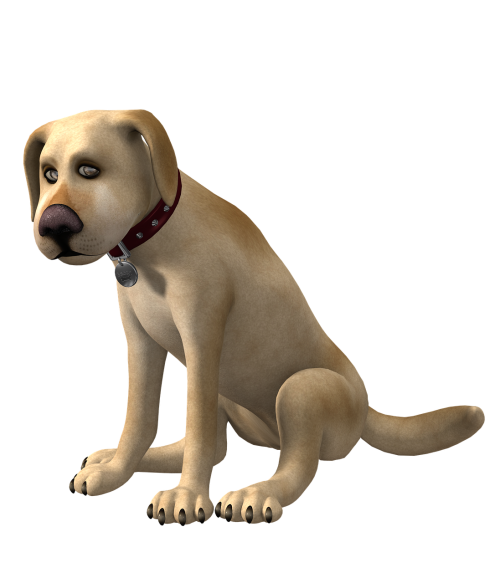 dog toon toon dog
