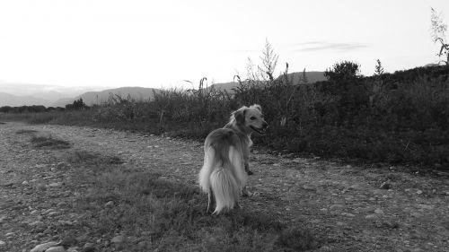 dog doggy mestizo