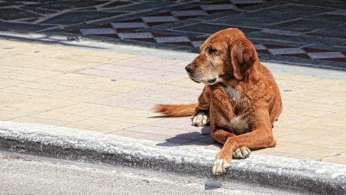 dog guard dog quiet
