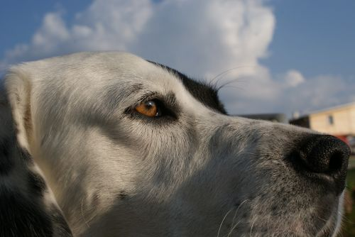 dog animal friend