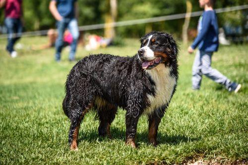 dog wet nature