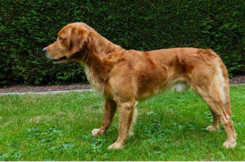 dog young dog portrait