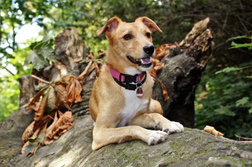 dog autumn hybrid