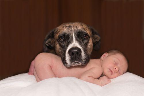 dog baby animal