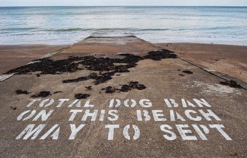 dog ban beach