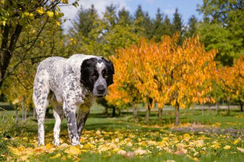 dog autumn tree