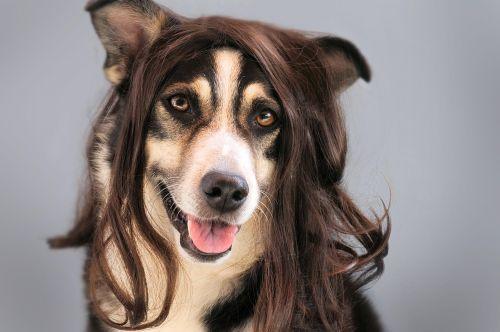 dog hair wig