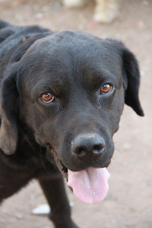 dog black dog domestic animals