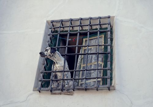 dog the lone grille