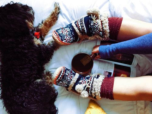 dog pet furry