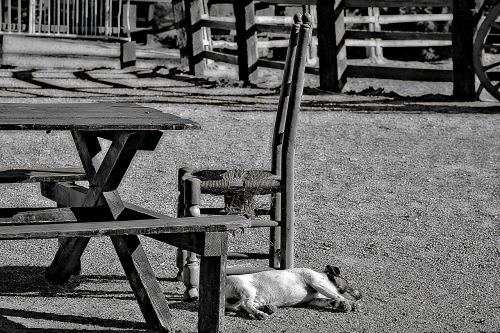 dog,stable,outside,chair,table,outdoor furniture,tranquility,outdoor,nature,sun,black and white