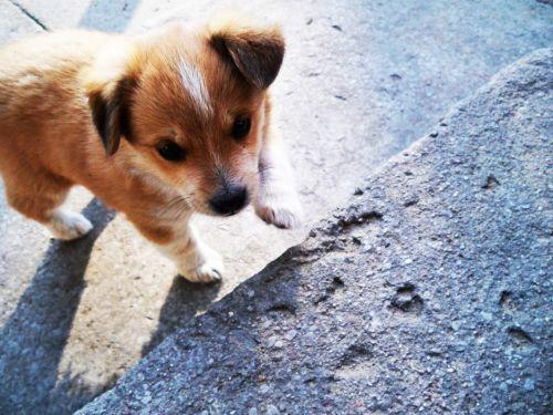dog puppy doggy