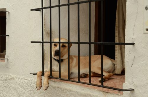 dog pet window
