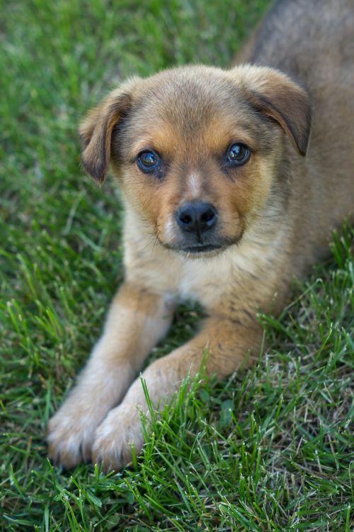 dog doggie doggy
