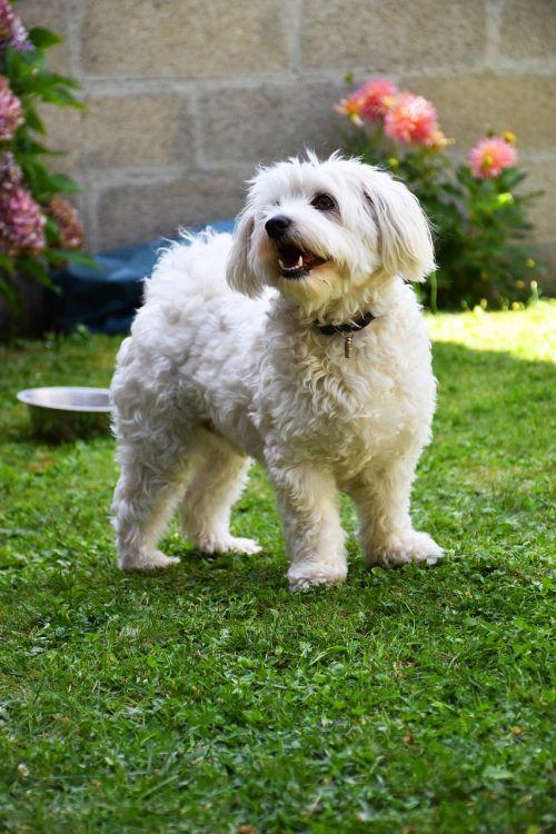 dog garden white