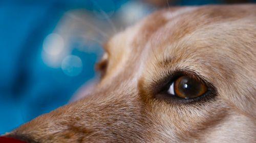dog look innocent