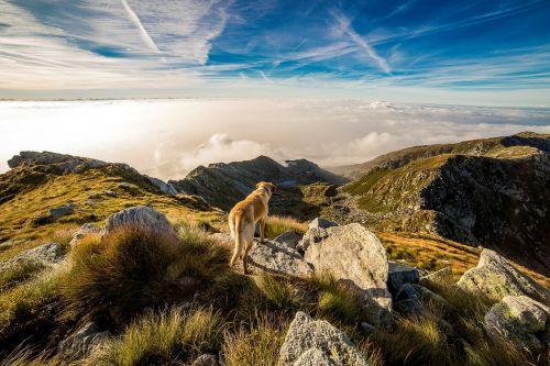 dog mountain mombarone