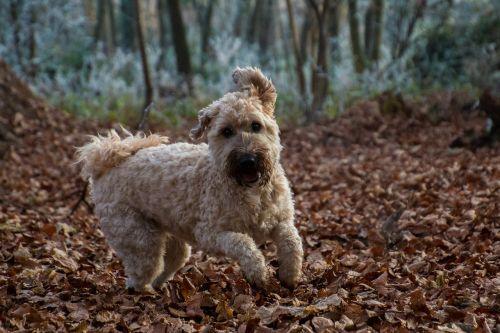 dog jump play