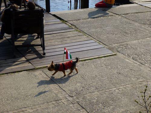 dog funny hungarian flag