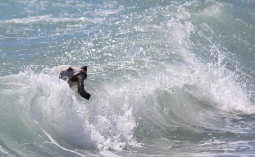 dog action surf